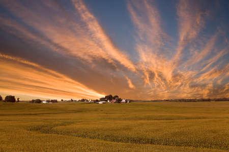 planta de maiz: Un campo de maíz estadounidense rural en Iowa