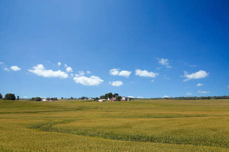 A rural American cornfield in Iowa Stock Photo - 9474597