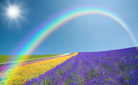 rainbow scene: Flower field and blue sky with clouds. Stock Photo