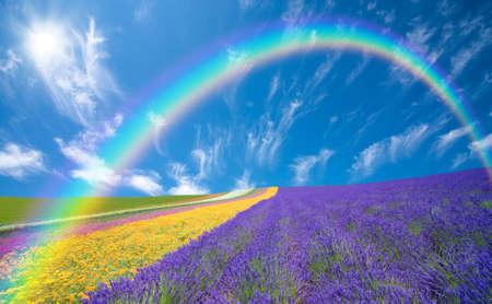 花と雲と青い空。 写真素材 - 9514258