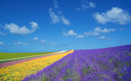 Flower field and blue sky with clouds. Standard-Bild