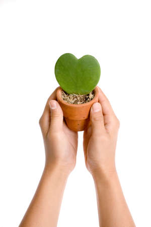 Heart shape plant in hand on white background photo