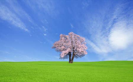 green hill and Sakura tree. photo