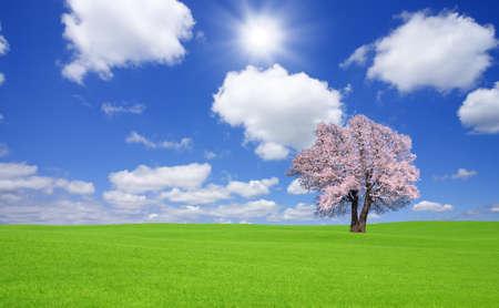 Sakura tree on the green hill. photo