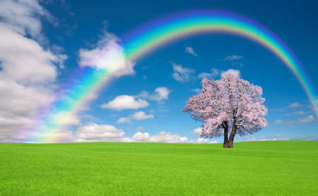 Sakura tree with rainbow on the green hill. photo