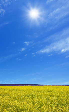Rapeseed field  Stock Photo - 10900125