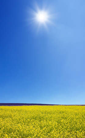 Rapeseed field Stock Photo - 10900123