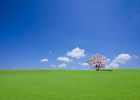 Green hill and cherry tree photo