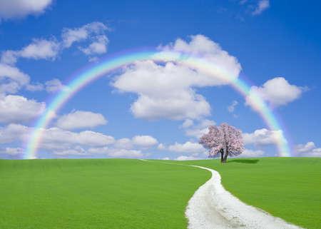 White road to cherry tree with rainbow