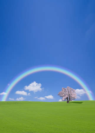 Cherry tree on the hill with rainbow photo
