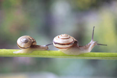 mucus: Snail