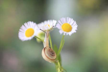 slime: Snail