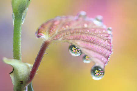 glistening: Water droplets suspended on the underside of a leaf reflect the surrounding plants in perfect miniature.