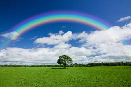 arc: Beautiful colourful rainbow over an empty green field with a single line of trees on the skyline.