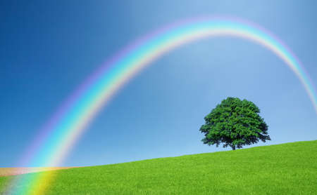 Green fields and lone tree Standard-Bild