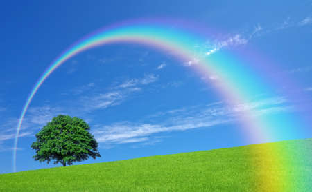 rainbow scene: Green fields and lone tree Stock Photo