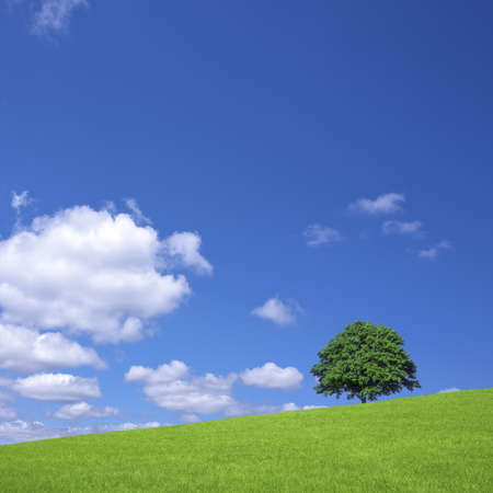 Green fields and lone tree Stock Photo - 14882340