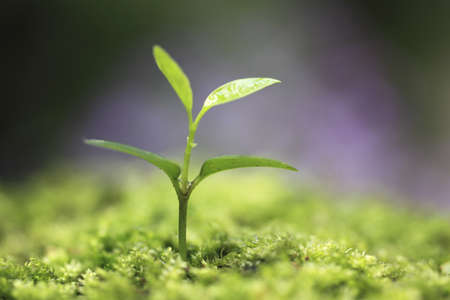 Sprout in the forest. Stock Photo - 16330984