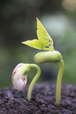 Sprout w lesie. Zdjęcie Seryjne