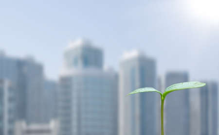 Green sprout and cityscape photo