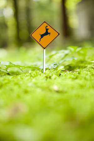 micro drive: Micro deer caution sign in green forest