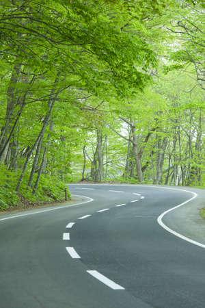 Road in einem grünen Wald
