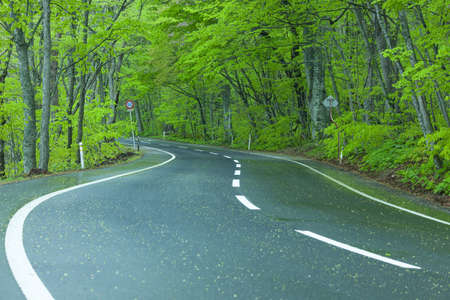 Road in a green forest photo