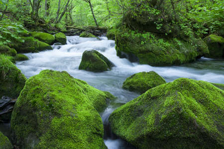 cascade mountains: Stream in green forest