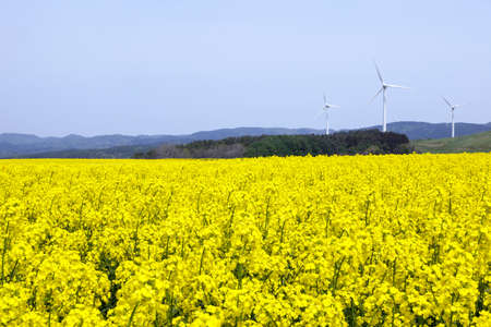 Yellow landscape with turbines  Stock Photo - 20472661