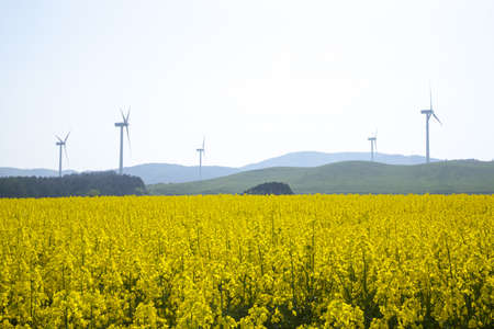 Yellow landscape with turbines and sun photo