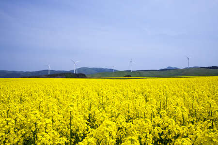 Yellow landscape with turbines  photo