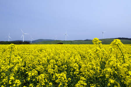 Yellow landscape with turbines  Stock Photo - 20549093