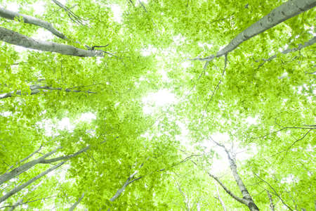 early summer: Beautiful green forest in early summer.