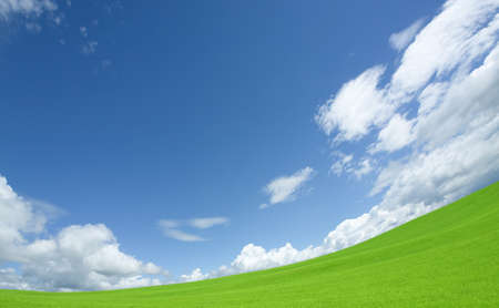 sky and grass: Green grass and sky