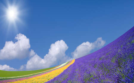 flowers sun: Flower field and blue sky with clouds. Stock Photo