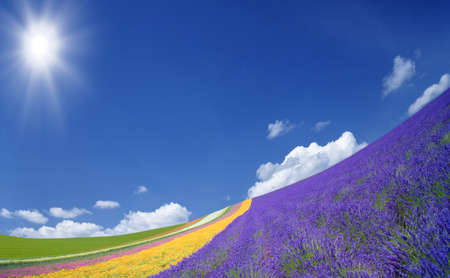 sunlit: Flower field and blue sky with clouds. Stock Photo