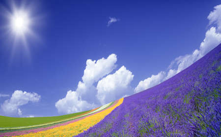 grass flower: Flower field and blue sky with clouds. Stock Photo