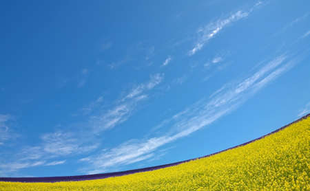 non urban scene: Flower field and blue sky with clouds. Stock Photo