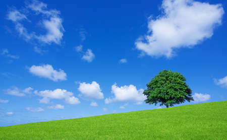 sky and grass: Green fields and lone tree Stock Photo
