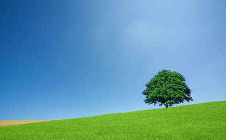 a meadow: Green fields and lone tree Stock Photo
