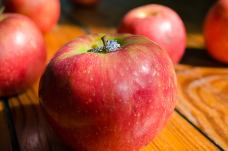 marrying: Several apples one of which has a wedding ring on top. Stock Photo
