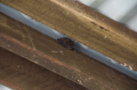 Bat in the rafters of the ubajee walkers camp outhouse
