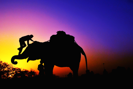 Elephants on sunset photo