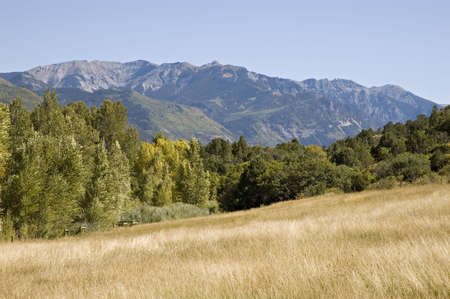 Golden grasses on a slope in the mountains Stock Photo - 304646