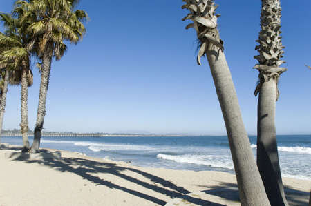 Ventura Beach with Palms