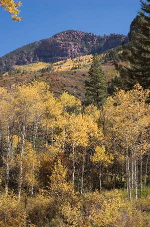 Autumn Woods Near Redstone