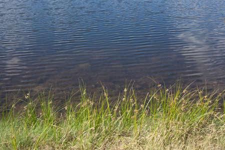 Summer Lake Shore Background