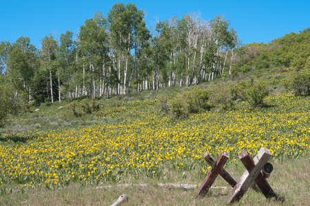Pinyon Mesa Glade Park à proximité de l'été