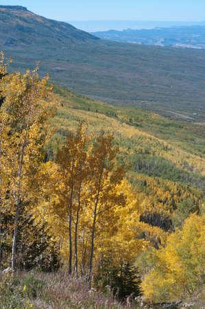 Trembles dorés sur le Grand Mesa, Colorado Banque d'images