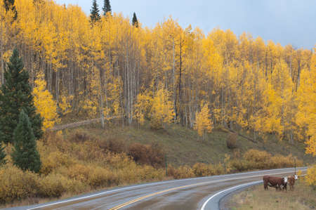 Autumn on the Grand Mesa, Colorado